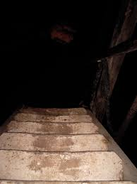 Impressive Creepy Basement Stairs In Excellent Dark Best With Intended Decor