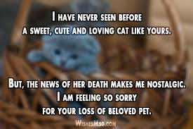 Condolences Messages For Death Of A Cat Sweet Condolence Message ...