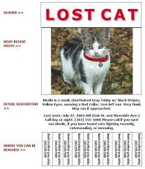 Missing Cat Poster Template Lost Pet Template Rome Fontanacountryinn Com