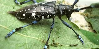 Invasive beetle creeps closer to Michigan