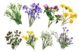 """Résultat de recherche d'images pour """"fleurs des champs"""""""