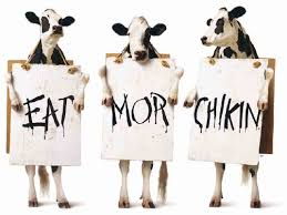 Image result for chick fil a cows