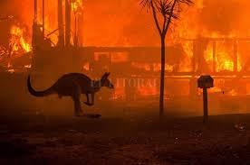 Resultado de imagen de incendio australia noticia