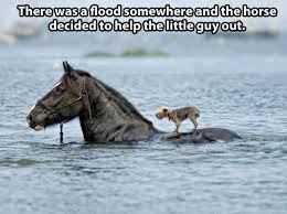 Beautiful Animal Quotes Best Of Beautiful Act Of Animal Kindness