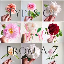 American Rose Size Chart Types Of Roses