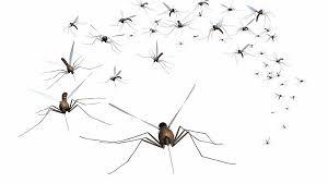 winter diy mosquito control