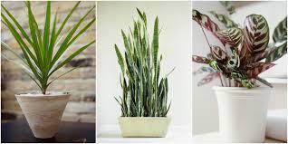 best low light houseplants 4
