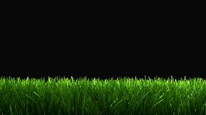green grass field animated. Green Grass Animation For Lower 3rd, Matte Included. Motion Background - VideoBlocks Field Animated