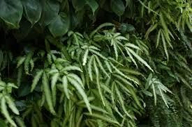 Fern Curtains | Woodland garden, Native plants, Ferns