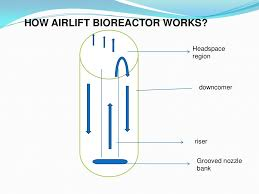 Bioreactor Design Ppt Airlift Bioreactor Ppt