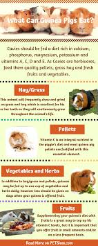 What Can Guinea Pigs Eat A Guide To The Cavy Diet Petsium
