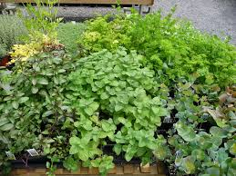 Herb Garden Garden Design Garden Design With Quality Soil Potted Herb Garden