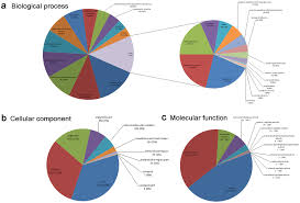 Pie Charts Showing Gene Ontology Go Classification