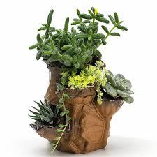 Succulent Pot Design Details About Ceramic Lotus Bottle Cacti Succulent Plant Pot Flower Planter Mini Garden Design
