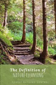 Word Of Nature The Forest Bathing Concept Of Nature Cleansing Forest Bathing Central