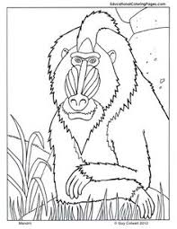 Small Picture Rainforest African Rainforest Animals Coloring Page African