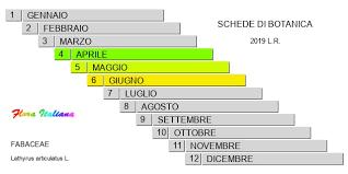 Lathyrus articulatus [Cicerchia articolata] - Flora Italiana