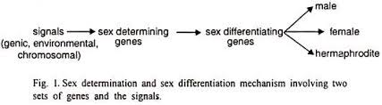 process of sex determination in different species essay biology essay 2 chromosome theory of sex determination