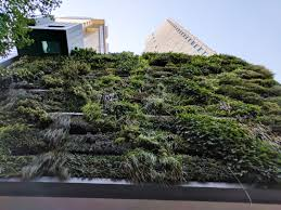 informal green wall indoors. Informal Green Wall Indoors