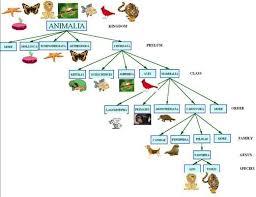 Animal Kingdom Classification Tree Google Search