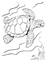25 Vinden Kleurplaat Schildpad Mandala Kleurplaat Voor Kinderen