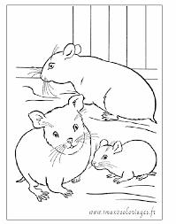 Coloriage Animaux A Imprimer Coloriage De Hamster Mignon L