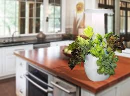 root countertop garden helps you grow organic sustainable food in your own kitchen
