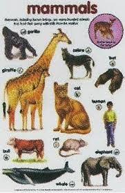 Chart Biology Mammals