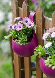 These annual plants do best in partial shade, as they don't like overly hot growing conditions. The Best Low Maintenance Plants For Outdoor Pots And How To Take Care Of Them Growing Family