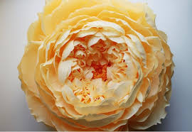 Large Tissue Paper Flower Giant Closed Crepe Paper Peony Paper Peonies Paper