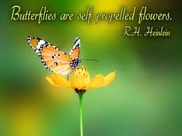 Butterfly Quotes Fascinating Butterfly Quotes Butterflies Are Self Propelled Flowers