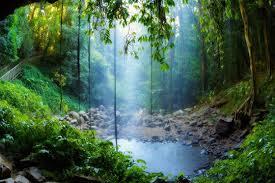 Image result for Ամազոնի անտառներ
