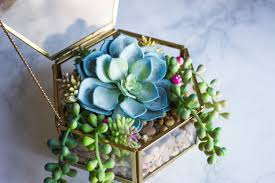 plant terrariums have always looked so cute to me but as a loving plant mom i could never put real plants inside something like a glass container because i