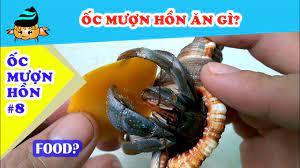 Ốc mượn hồn #6 - Ốc mượn hồn đẻ trứng? (Hermit crab #6 - Hermit crab laying  eggs?) - YouTube