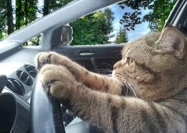 """Résultat de recherche d'images pour """"gif week end chat"""""""