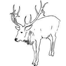 Small Picture Top 20 Deer Coloring Pages For Your Little Ones