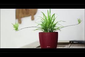 office flower pots. Rusted Plastic Flower Plant Pots Home Garden Office Inside European Archaize Flowerpot