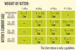 Veracious Kitten Weight And Feeding Chart Weight Chart For