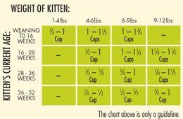 Kitten Feeding Chart Veracious Kitten Weight And Feeding Chart Weight Chart For