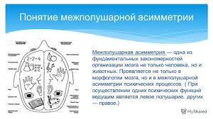 Презентация на тему Функциональная асимметрия больших полушарий  3 Понятие межполушарной асимметрии