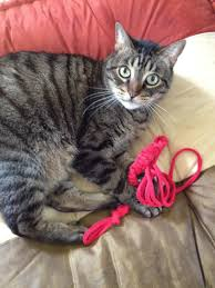 i ve been experimenting with cat toys easy diy cat toys i found one that s been a real hit with the kitties as gremlin demonstrates here