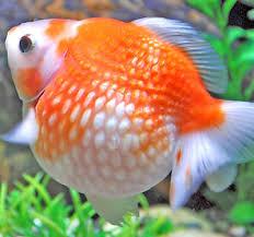 petsmart animals fish. Brilliant Petsmart New Pets In Petsmart Animals Fish E