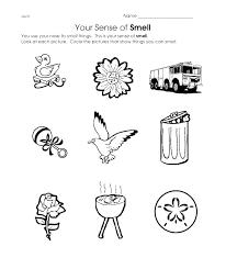 Senses Coloring Pages 5 Senses Coloring Page 5 Senses My 5 Senses