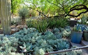 made in the shade gray foliage and spiky plants ramblings from a