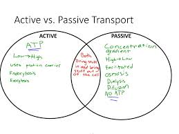 Venn Diagram Diffusion And Osmosis Unit 6 Cellular Transport Ppt Download