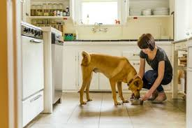 Diabetic Dog Meals What's The best option For The Family pet?