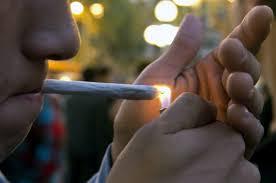 Resultado de imagem para consumo de cannabis