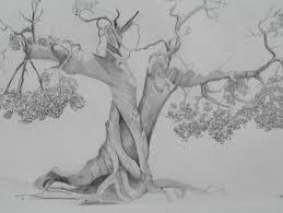 31 contoh gambar 3 dimensi dengan pensil yang menipu mata. Contoh Gambar Sketsa Pohon Dengan Pensil Yang Sederhana Dan Mudah