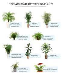 inspiring plants safe for cats these common plants are actually poisonous to non toxic cat plants
