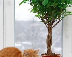 Full Size of Plant:awesome Common Indoor Plants Top 5 Indoor Plants And How  To ...